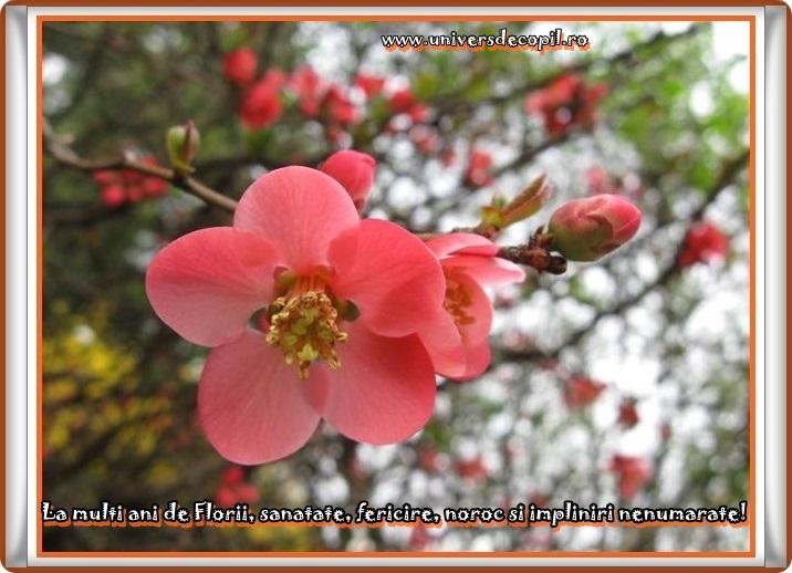http://www.universdecopil.ro/images/stories//adolescenti/timp_liber/florii_felicitari_2014/felicitari-de-ziua-floriilor.JPG