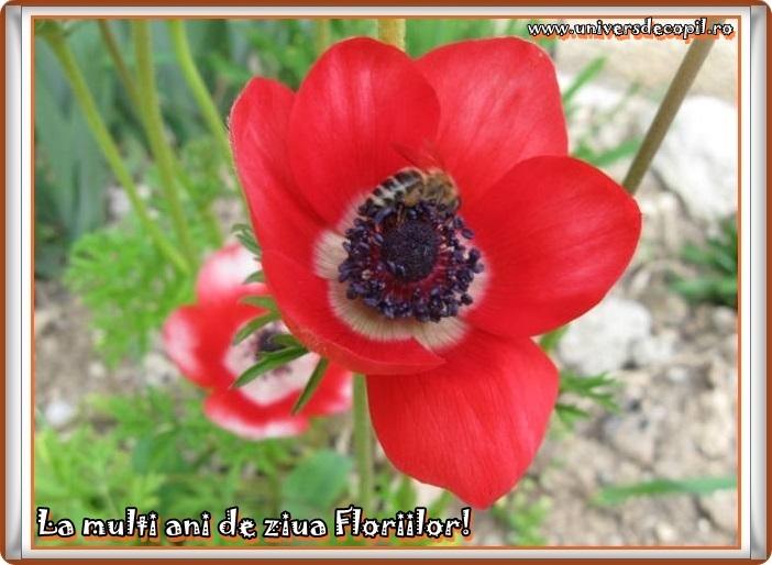 http://www.universdecopil.ro/images/stories//adolescenti/timp_liber/florii_felicitari_2014/la-multi-ani-felicitare-de-florii.JPG