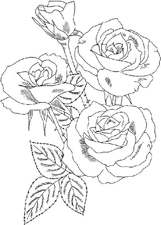 Flori De Toamna Planse De Colorat Planse De Colorat