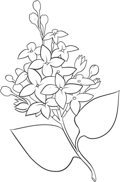Planse De Colorat Cu Flori De Liliac Planse De Colorat