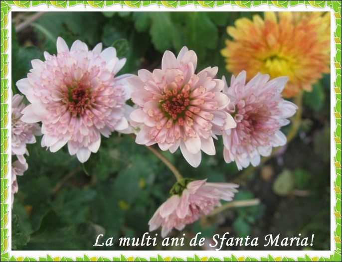 http://www.universdecopil.ro/images/stories/adolescenti/timp_liber/felicitari-sfanta-maria/sf%20maria%20felicitari.jpg