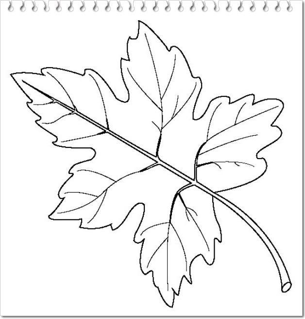 planse de colorat cu frunze de toamna