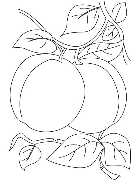 coloring pages prunes - photo#16
