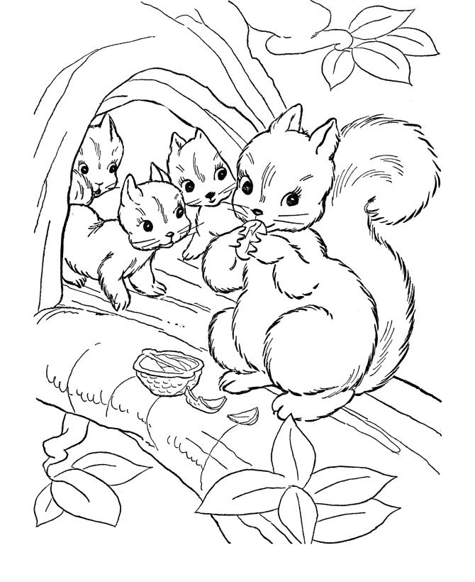 cute woodland animal coloring pages | Fructe de toamna planse de colorat | Planse de colorat